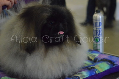 Helena Dog Show129