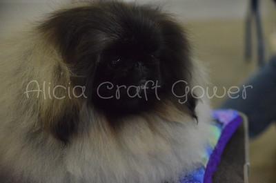 Helena Dog Show122