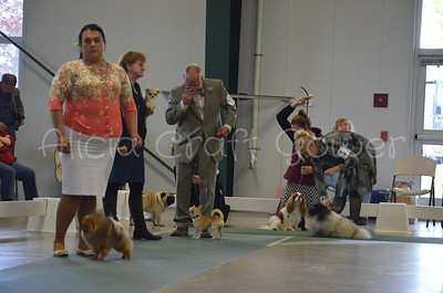 Helena Dog Show164