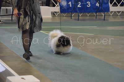 Helena Dog Show133