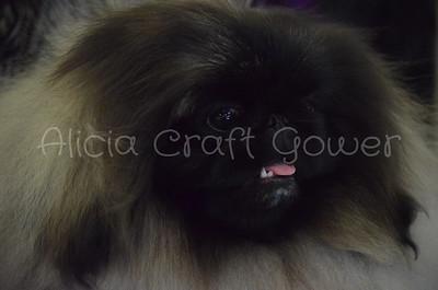 Helena Dog Show123