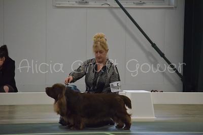 Helena Dog Show209