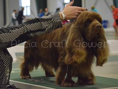 Helena Dog Show251