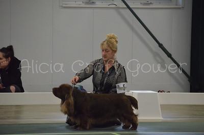 Helena Dog Show210