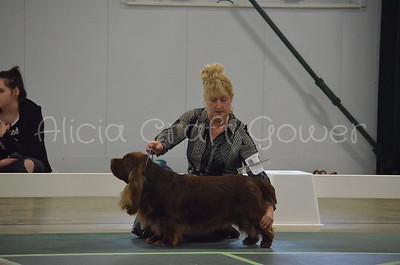 Helena Dog Show208