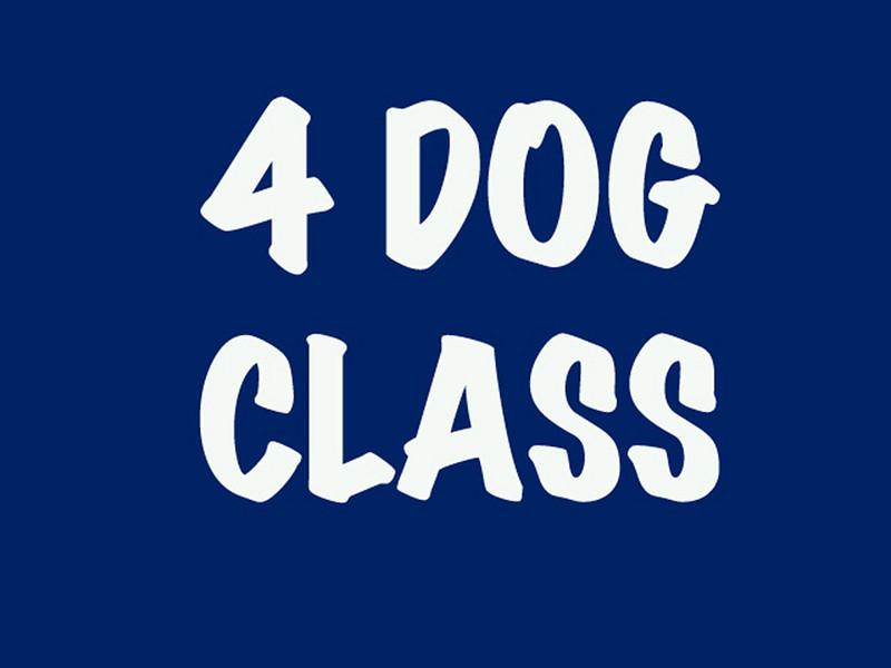 4 Dog