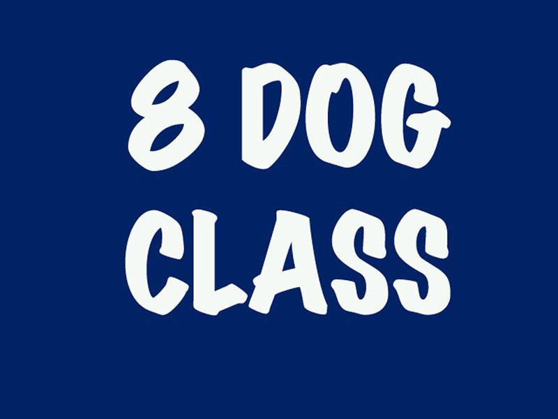 8 Dog