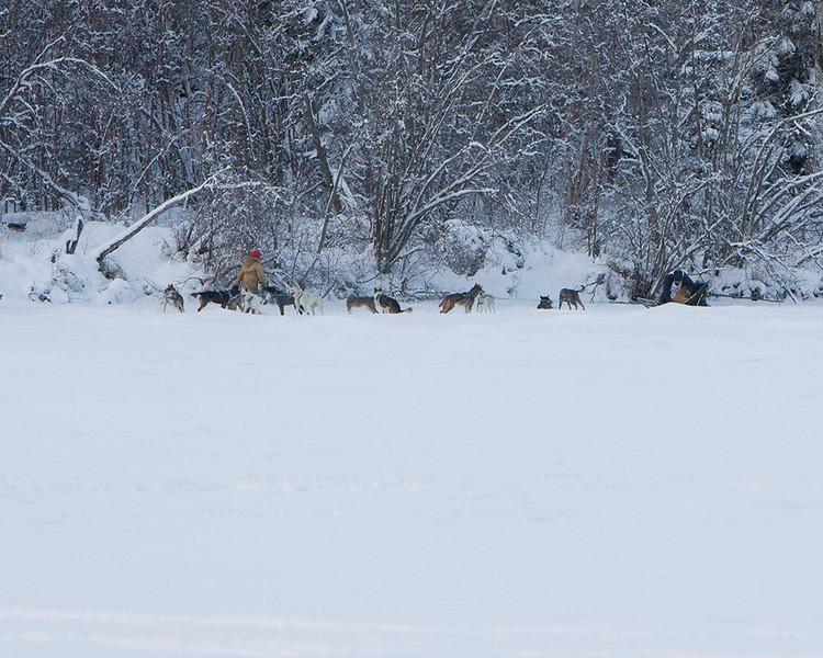 IMG_1470  Michael Supernant loading dog into sled