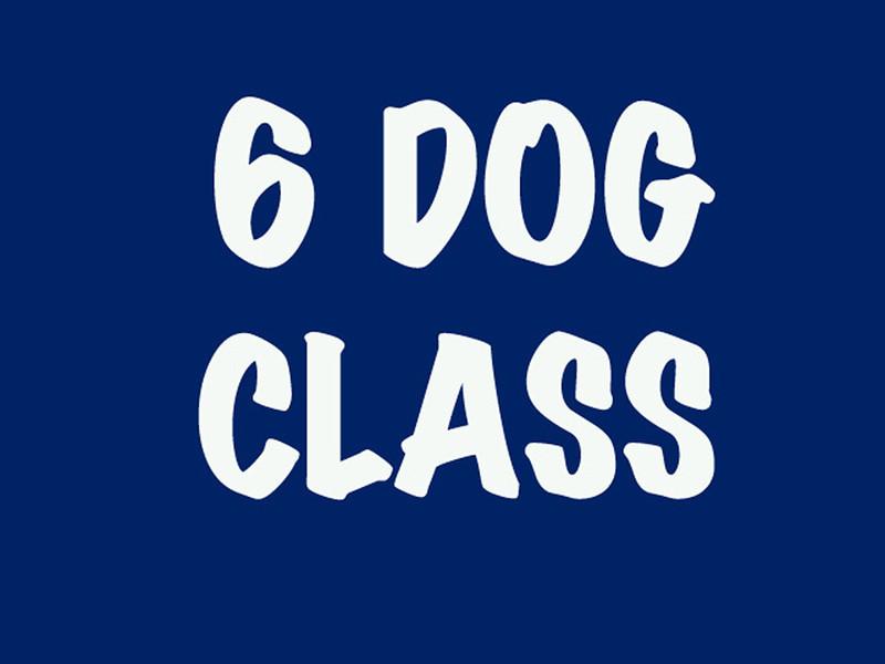 6 Dog