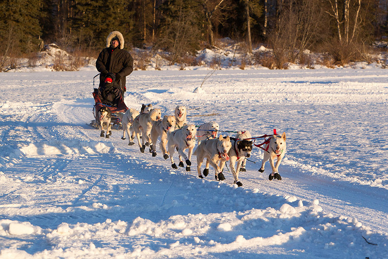 IMG_1392  Who's that???  Looks like a distance musher to me!