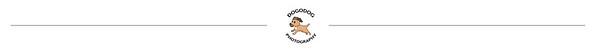 Dogodog Photography web banner