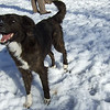 SUMMER  (border collie mix, fast)  mar 20