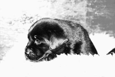 Jasper puppies -- Feb. 17, 2010