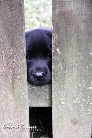 Sadie x Dauber pups