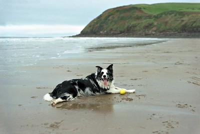 St Bees Head : Exhausted Cassie