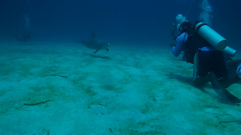 DOLPHIN DIVE @ ANTHONEYS KEY 4-15