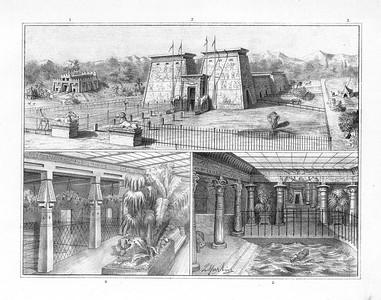 Atlas zur Praxis der Naturgeschichte:12 Tafeln nach Zeichnungen von Leopold Martin jun.Tafel V