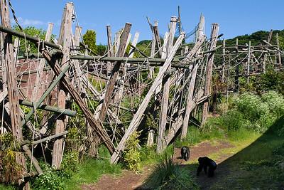 11 Edinburgh Zoo, Budongo Trail