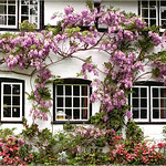 """Print title : """"NEW FOREST COTTAGE """""""