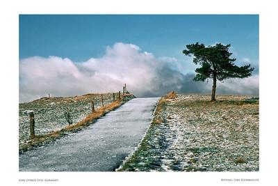 Lone Cypress Eifel (Germany)