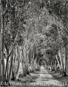 Eucalyptus Alley (GXR S10 Module)
