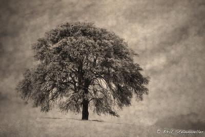 Perfect Oak