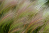 Grass at Mono Lake
