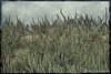 Moss Landing Beach