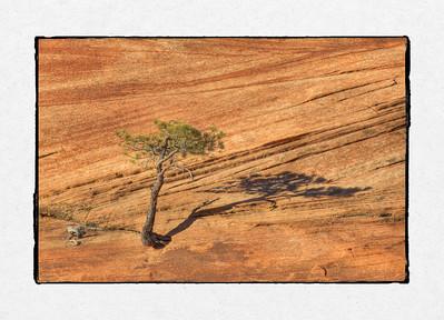 Zion Lone Tree #1