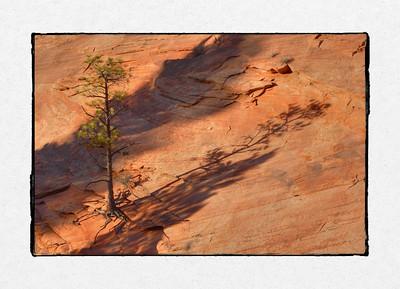 Zion Lone Tree #2