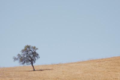 Tree on Hill (50D, C1, 70-200f4)