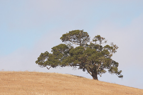 Hollister Hills and Trees