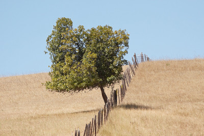 Tree on Hill (50D, C1, 70-200f4)