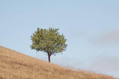 0Tree on Hill (50D, C1, 70-200f4)