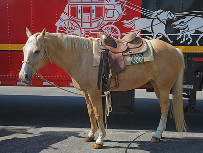 Wells Fargo Coach Lead Horse