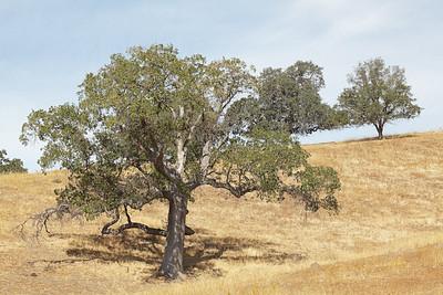 San Benito Oak Country