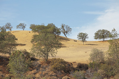 San Benito Oak Country