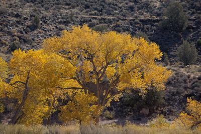 Kolob Fall Colors (5D2)