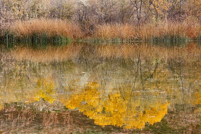 Zion Pond Reflections (5D2)
