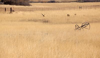Kolob Grass (5D2)
