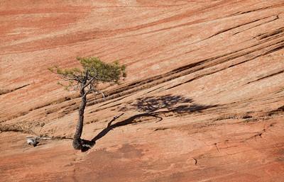Zion Lone Tree #1 (5D2)