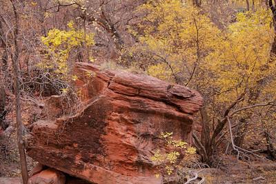 Zion Rock Fall Colors (5D2)