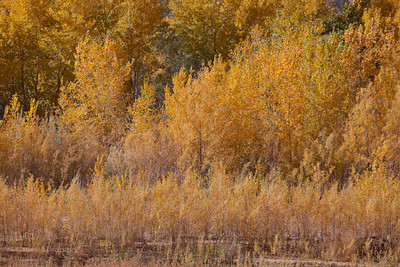Virgin River Fall Colors (5D2)