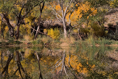 Kolob Pond Reflections (7D)