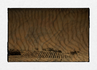 Vinyards blended with Dunes