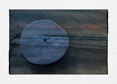 Sand Dollar and Sunset