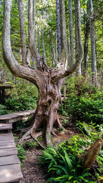 005 TREE POSING REV01