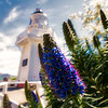 Bloom Time at the Lighthouse