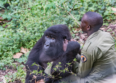 Gorilla-and Handler-DSC_0069