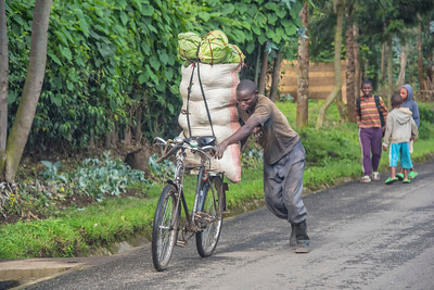 Man-wheeling-Cabbages-DSC_0175
